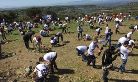 500 persone hanno ripiantato i fichidindia a Su Piroi