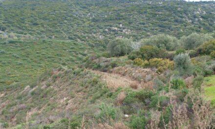 Capoterra – Giornata dell'Albero